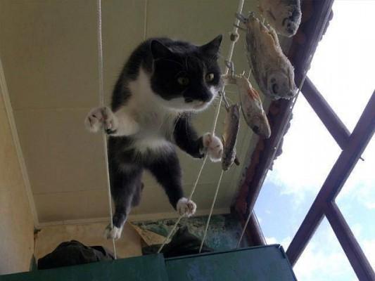 Котятки: Есть захочешь - не так раскорячишься
