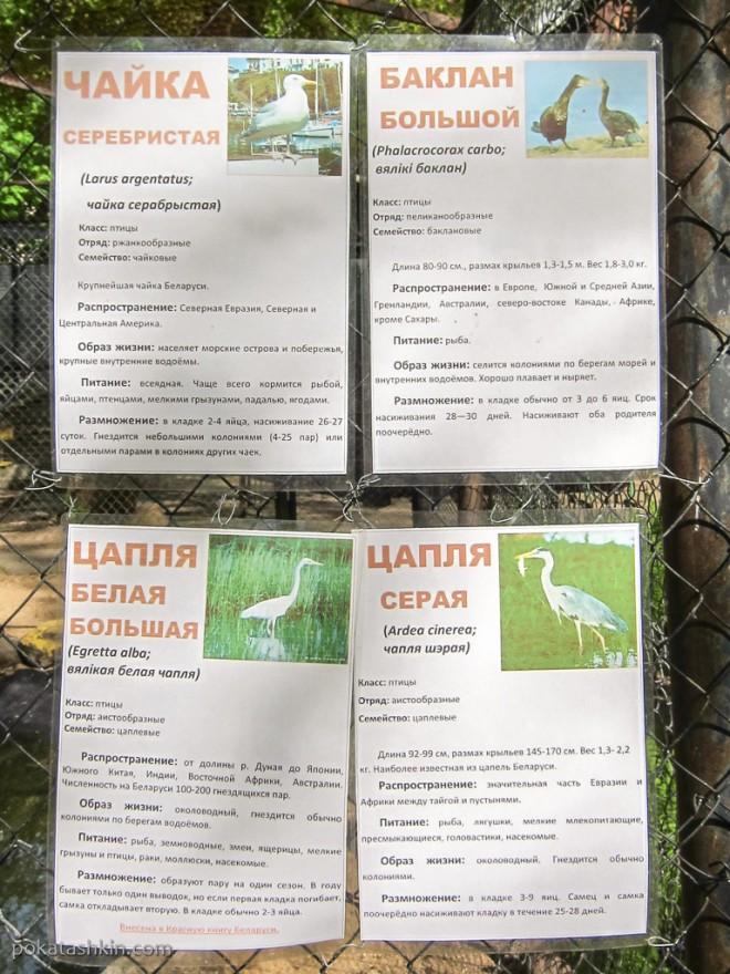Большая клетка с разными птицами: чайки, балканы, цапли, кряквы и утки