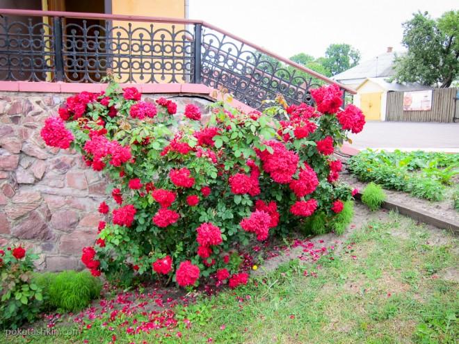 Цветы на территории, Мозырский замок