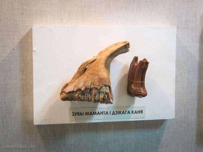 Зубы мамонта