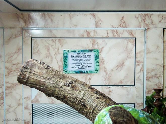 Зелёный (древесный) питон