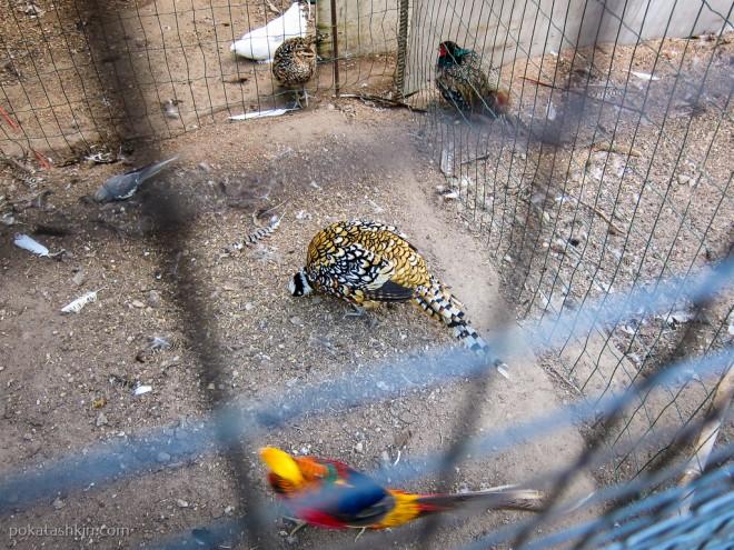 Зоологический уголок в парке развлечений «Dreamland» / «Дримлэнд»