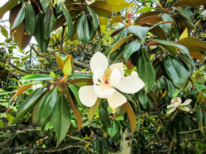Цветы в Батуми