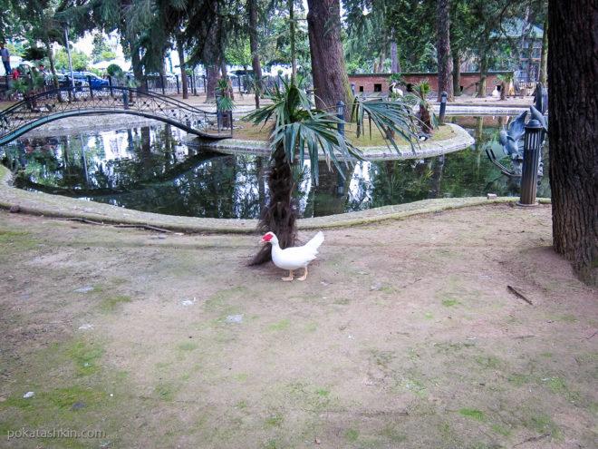 Мини-зоопарк в Батуми