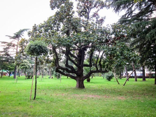 Интерсное дерево