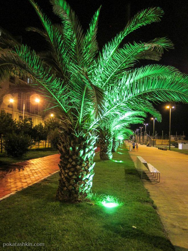 Пальмы на Батумском бульаре