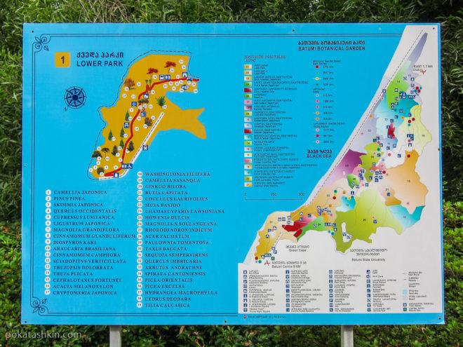 Схема Батумского ботанического сада