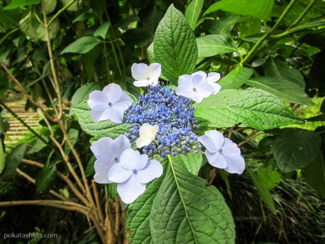 Цветы в Батумском ботаническом саду