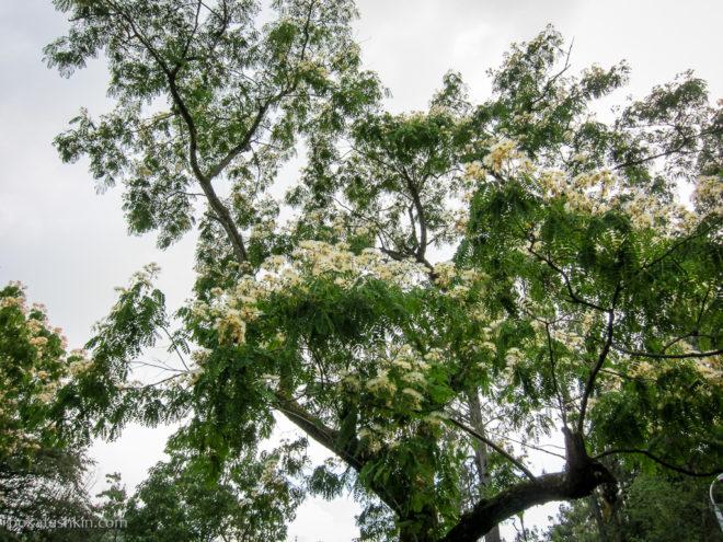 Батуми. Ботанический сад