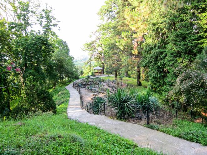 Мексиканская зона в Батумском ботаническом саду