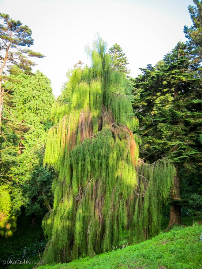 Северо-Американская зона ботанического сада в Батуми