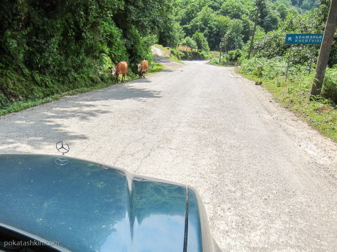 Поездка по окрестностям Батуми