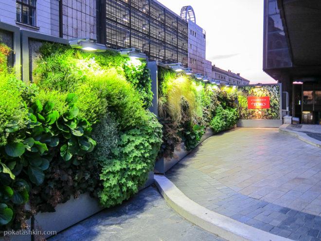 Живой зелёный забор