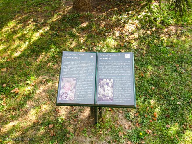 Таблички возле деревьев в Пионерском парке