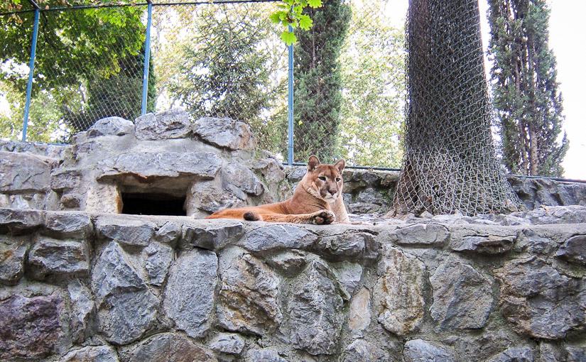 Белград. День 4. Зоопарк