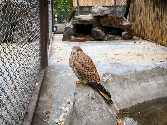 Птицы белградского зоопарка