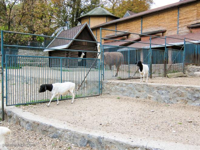Животные в зоопарке Белграда