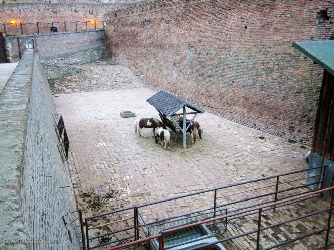 Белградский зоопарк и крепость