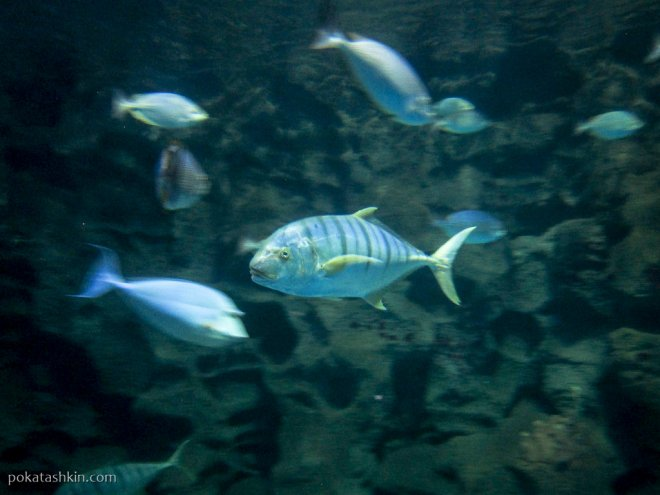 Аквариум SEA LIFE Istanbul