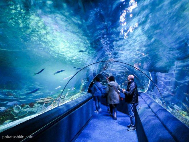 Подводный туннель в аквариуме SEA LIFE Istanbul