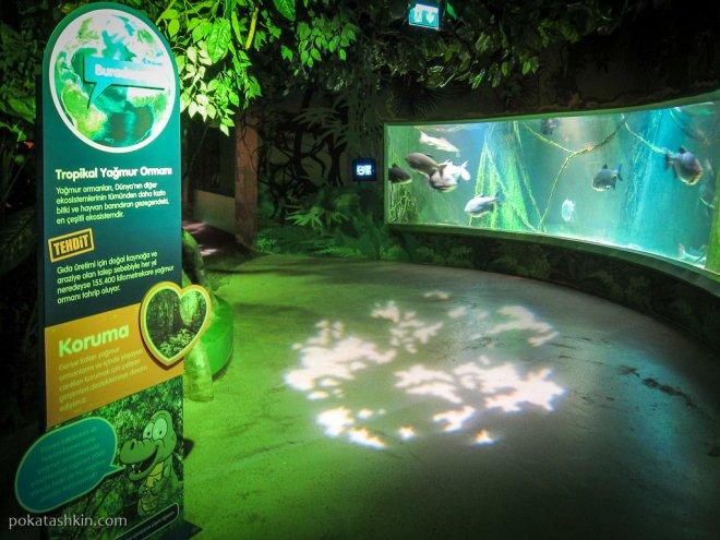 Зона тропических лесов в аквариуме SEA LIFE Istanbul