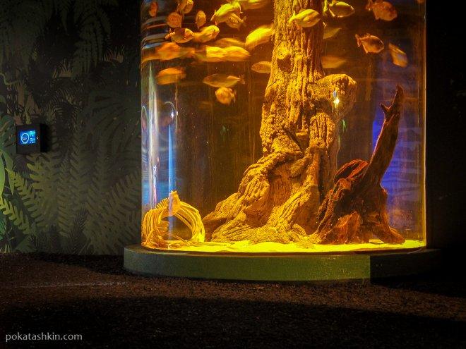 Пираньи в аквариуме SEA LIFE Istanbul