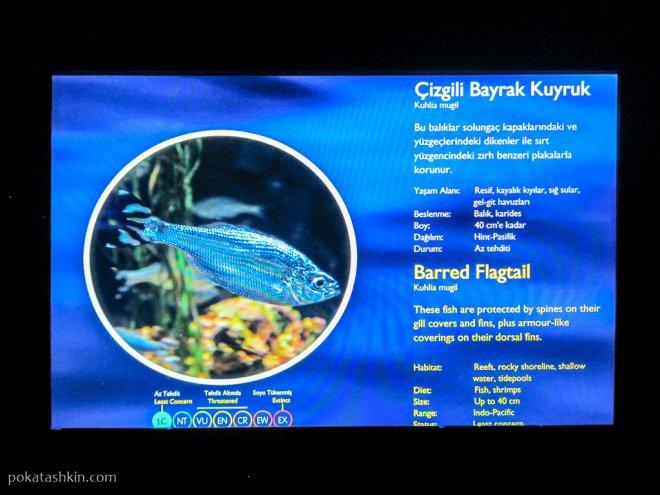 Описание рыб в аквариуме SEA LIFE Istanbul