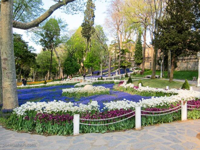 Тюльпаны в парке Гюльхане (Gülhane Parki)