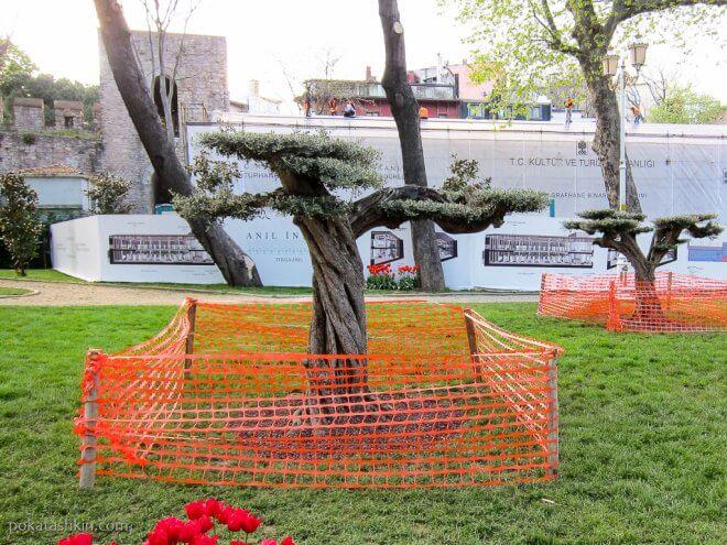 Низкое дерево