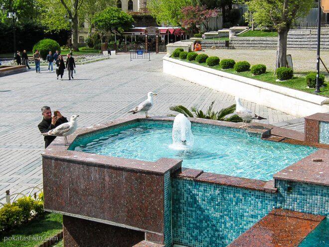 Чайки и фонтан