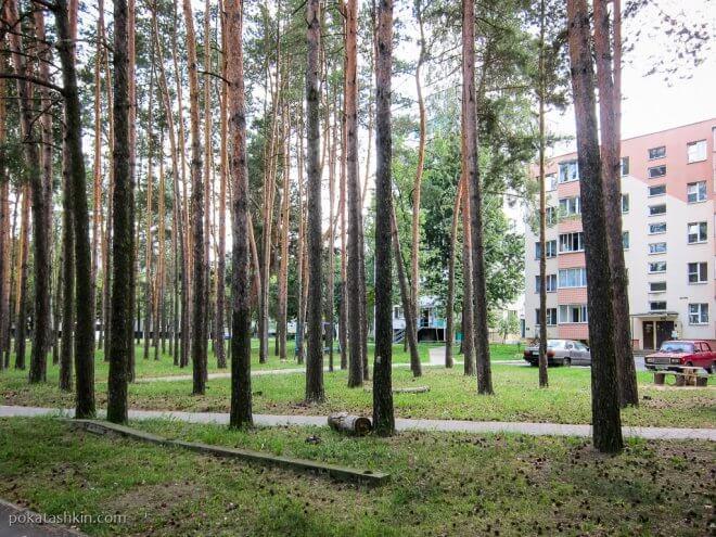 Деревья в Светлогорске