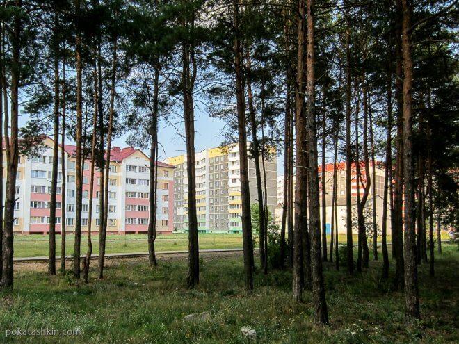 Остатки леса в микрорайоне Полесье (Светлогорск)