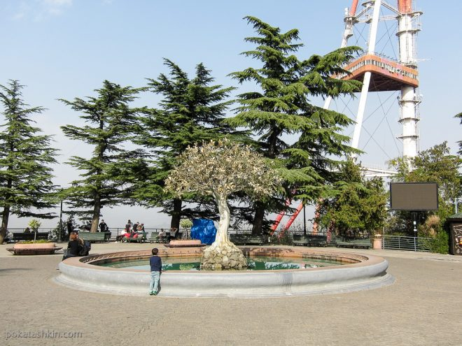 Парк Мтацминда: дерево