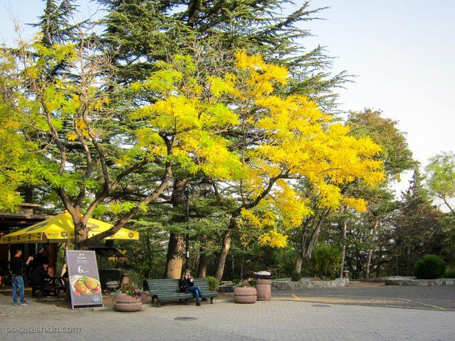 Парк Мтацминда: золотая осень