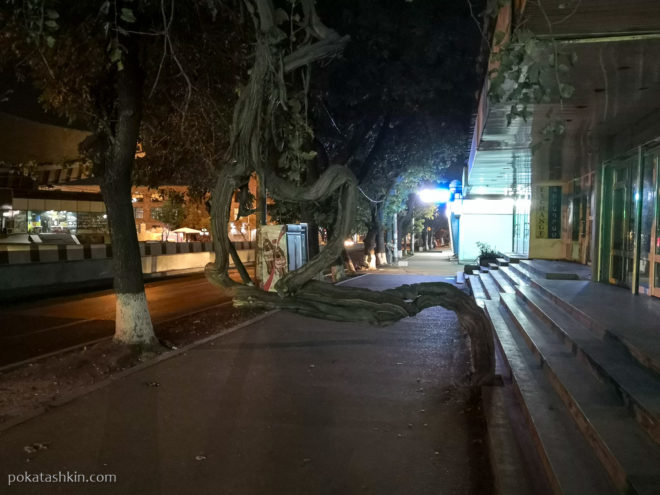 Дерево поперёк тротуара