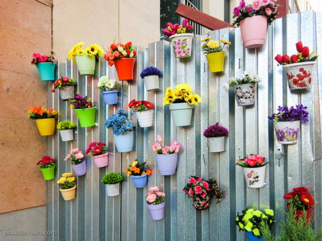 Цветы на заборе